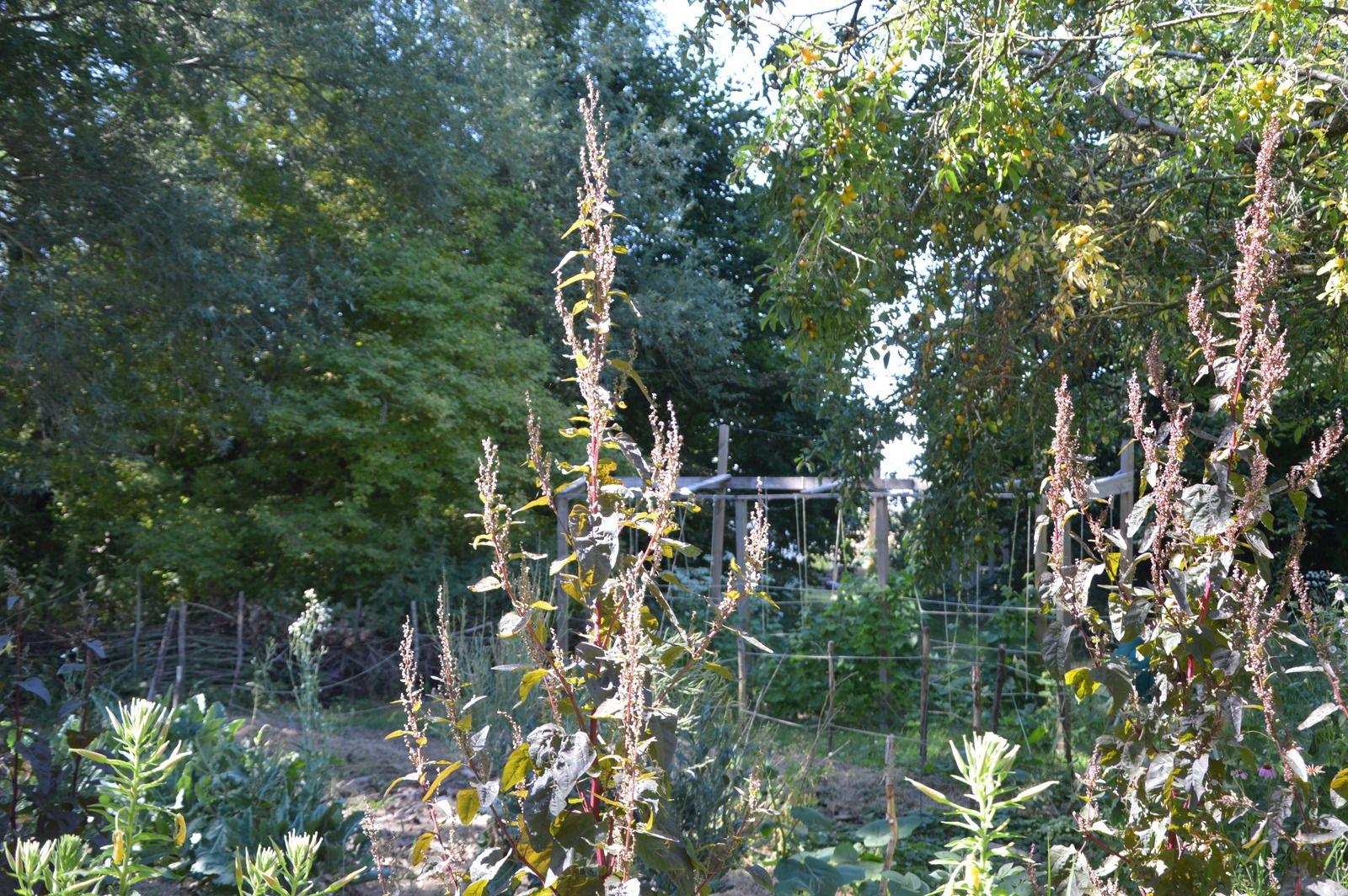 Les Jardiniers Complices au Fabuleux Jardin