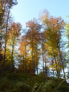 Le Palatinat, panorama d'un petit coin de paradis