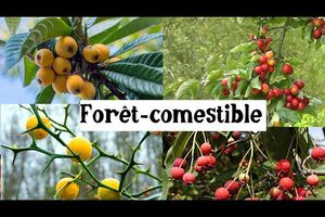 Fruitiers originaux et rustiques pour la forêt-comestilbe