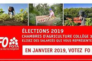 Elections 2019 : Chambres d'agriculture collège 3A