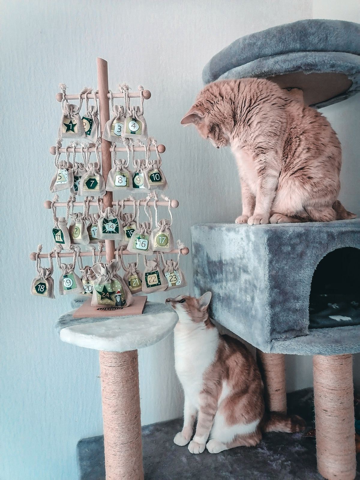 Calendrier de l'Avent chat Ultima