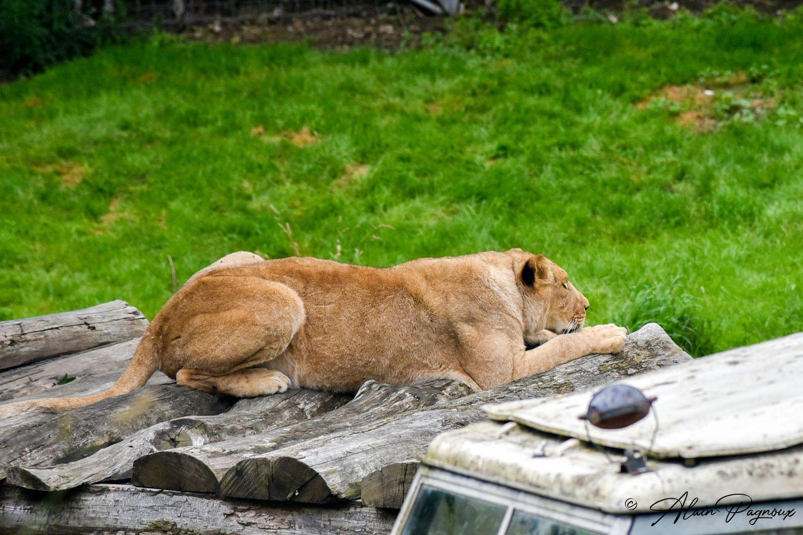 Parc zoologique de Cerza à côté de Lisieux dans le Calvados.