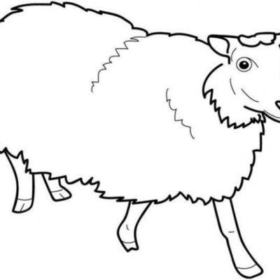Comment dessiner un mouton ? (trucs, astuces)