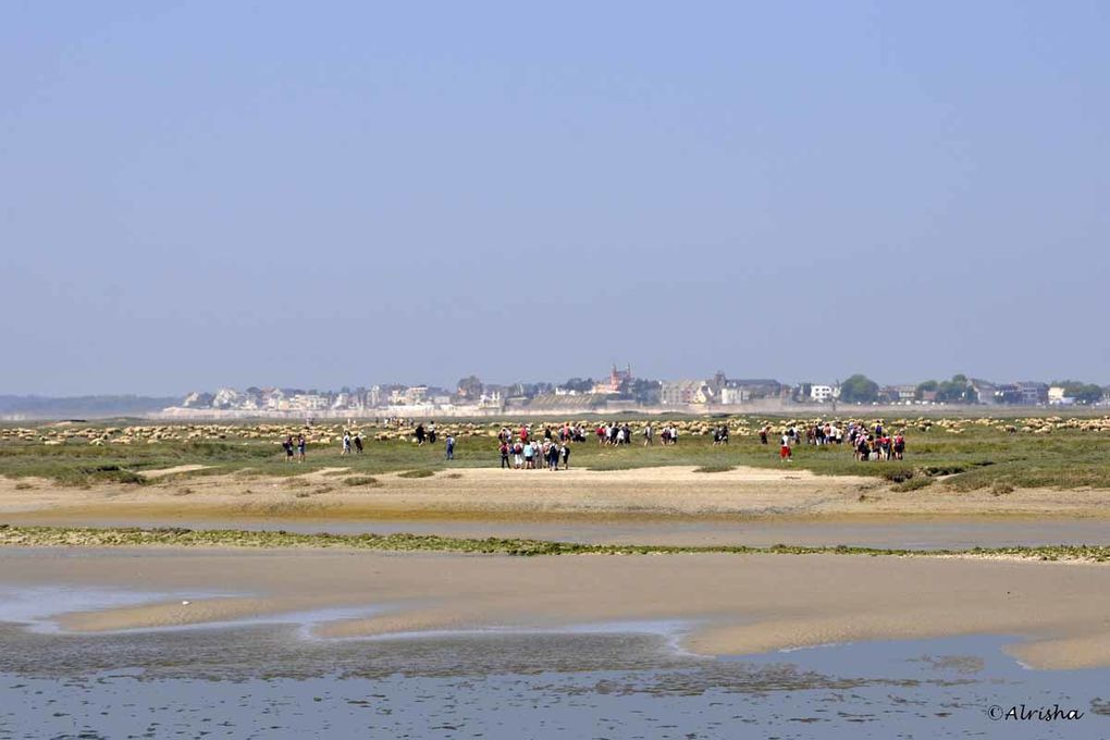 Le 23 mai 2010 à la Pointe du Hourdel, à Saint Valéry sur Somme et au Crotoy.
