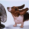 Six systèmes de climatisation inspirés de la nature