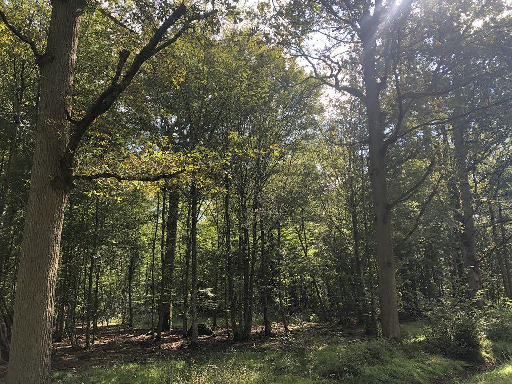 Randonnée de Bussy-Saint-Georges à Gretz-Armainvilliers - 16 km.