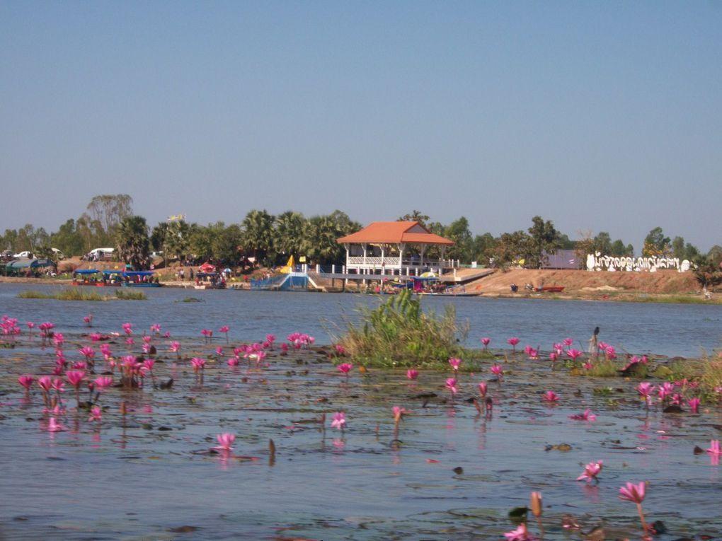 Thaïlande : Le lac aux lotus