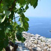 Île de Korčula (Croatie) : Domaines Krajančić / Bire / Bačić - Photos et Vins (Plaisir et Passion)