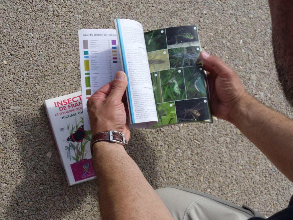 """Atelier du 21 mai 2011"""" Découverte et identification des papillons et insectes des jardins » avec un diaporama de Christian Wittebroodt."""