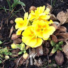 Le printemps est là ! La preuve en images...