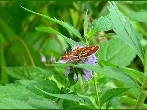 Les derniers papillons de l'été - 4 photos