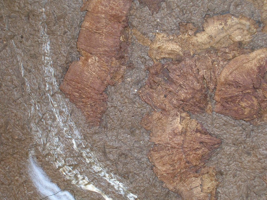 papier fait à base de fibres de bouleau fossilisées (de 2500 ans environ ),  ramassées en Brière et amadouvier pour les feuilles marron