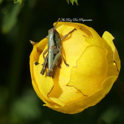 Photographie | Insectes n°4