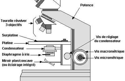 Microscope optique