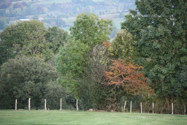 Couleurs d'automne sur la banne et le Puy de Sancy.