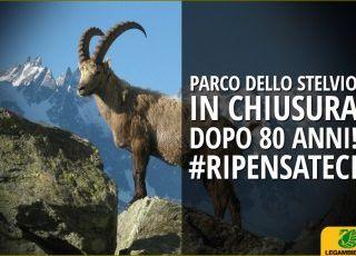 Stelvio: « Stiamo perdendo il più grande parco nazionale delle Alpi»