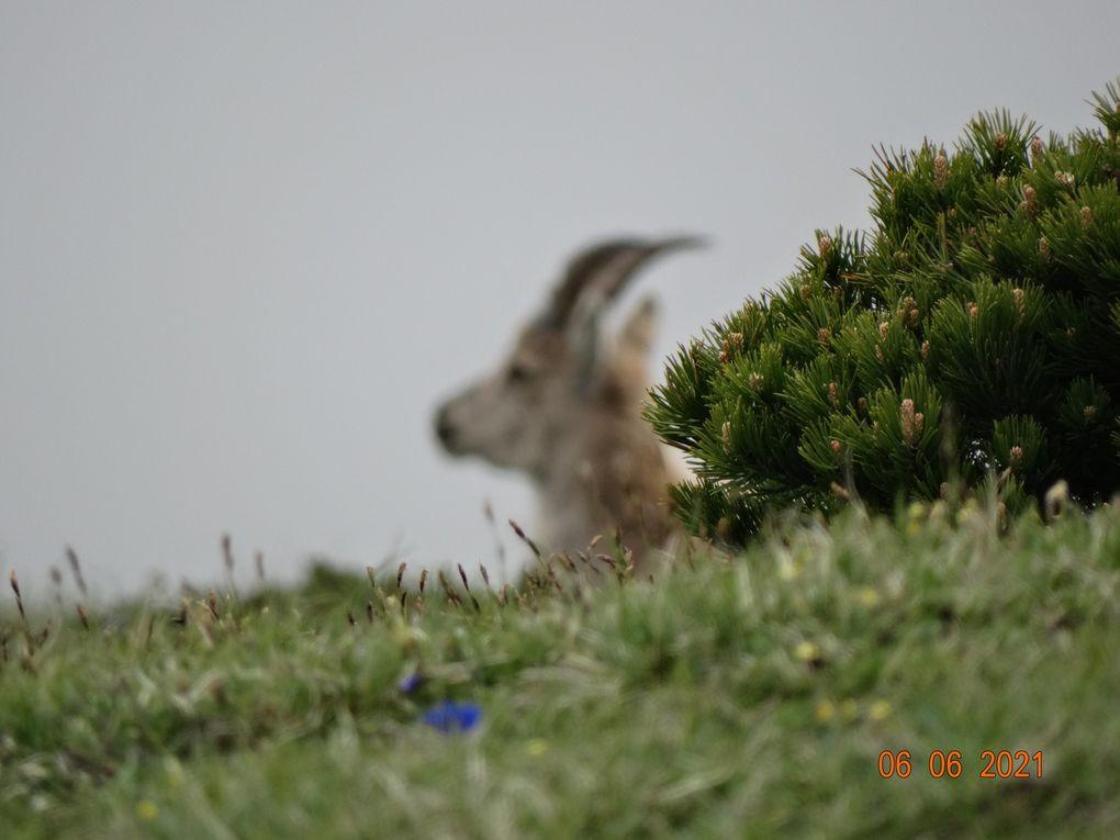 Chez le bouquetin, le mâle, comme chez les autres caprinés, est un bouc ; la femelle s'appelle l'étagne ; et le petit est un cabri.