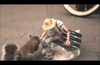 Vidéo d'un sdf en marionnette et d'un écureuil