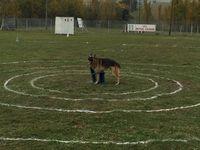 """[Manifestation] Épreuve de """"Ring"""" avec le Club Canin du Sud-Aveyron"""