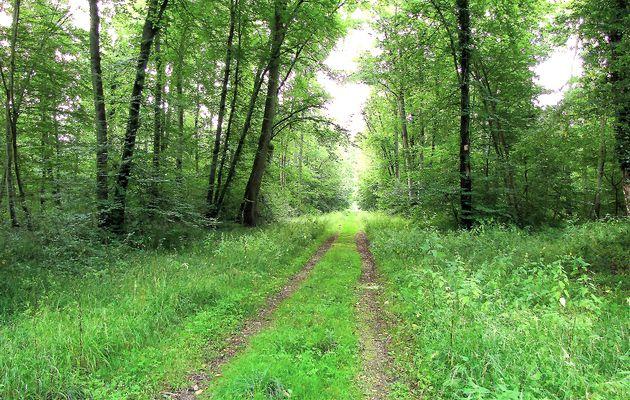 carrefour_Route de la Faisanderie_Route Marie