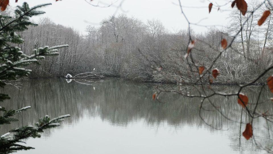 Aigrette à l'étang Lallemand