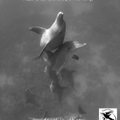 """Date des stages """"Dauphin"""" 2014"""