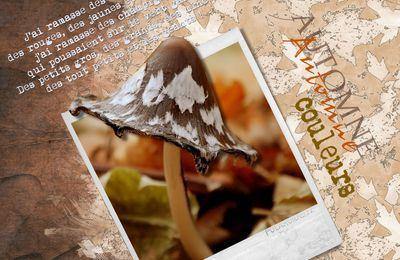 scrap champignons