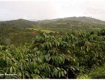 Le café au Vietnam