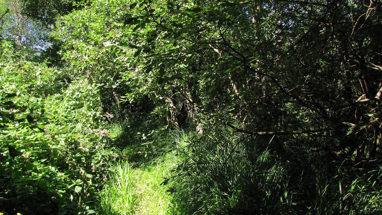 des étangs prés du hameau Le Buchet