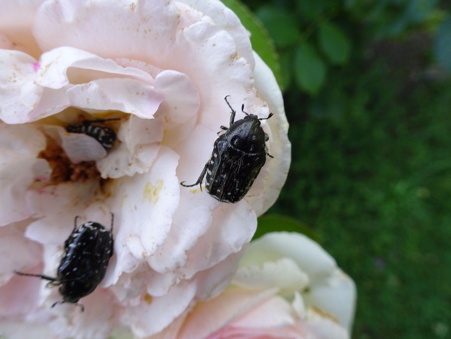 Quelques surprises de la nature photographiées par nos jardiniers