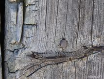 Collection Rust on wood