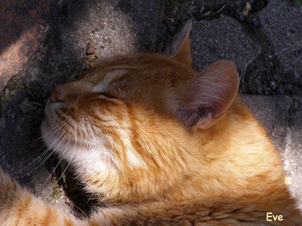 A la recherche du chat perché