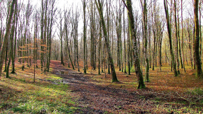 carrefour_Route de Chavigny_Rond d'Orléans (2)