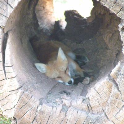 Trouvaille dans un tronc d'arbre
