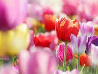 Inspiration Printemps-Spring Inspiration