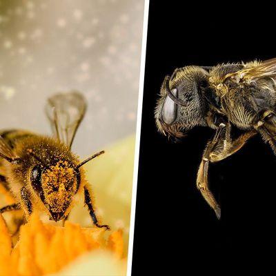 Les abeilles sont les êtres vivants les plus importants de la planète