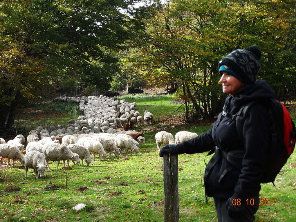 La pierre de l'ours ,ma randonnée au plateau d'Ambel  dans la Drôme
