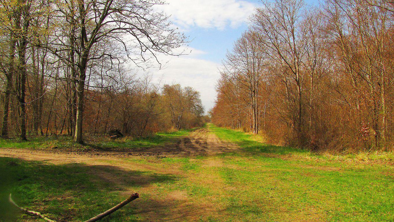carrefour_Route du Grand Octogone_Route des Ventes