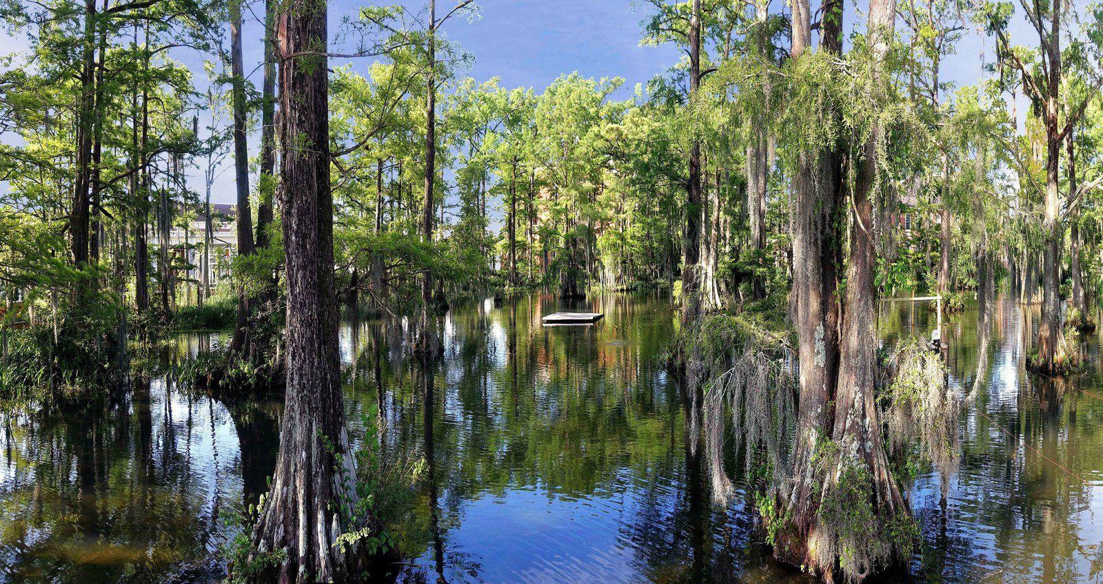 Lafayette Cypress lake