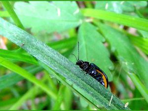 Petits insectes...