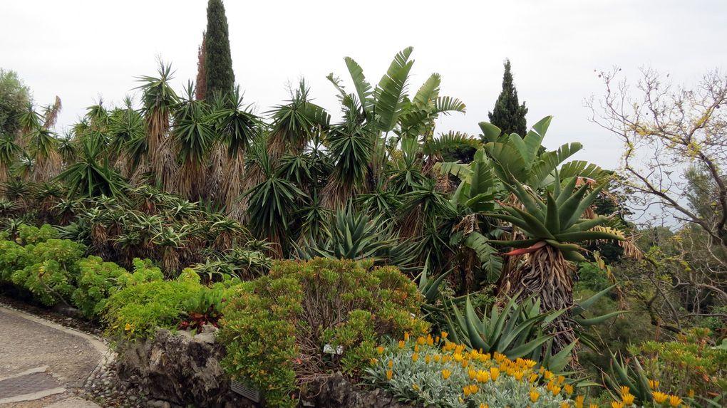 Visite des Jardins d'Hanbury