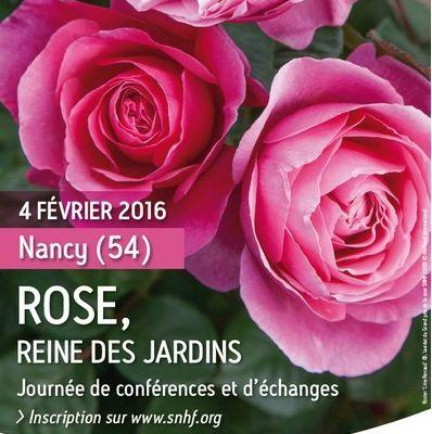 La Rose, Reine des Jardins à Nancy
