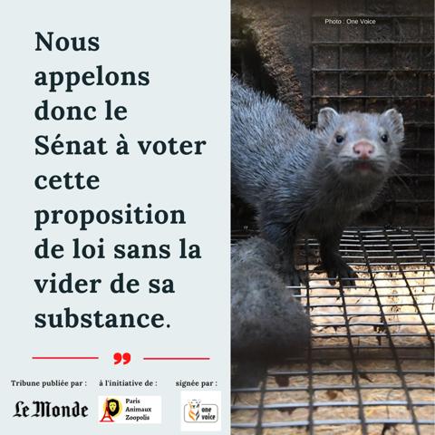 « L'adoption de la loi contre la maltraitance animale constituerait un premier pas historique »