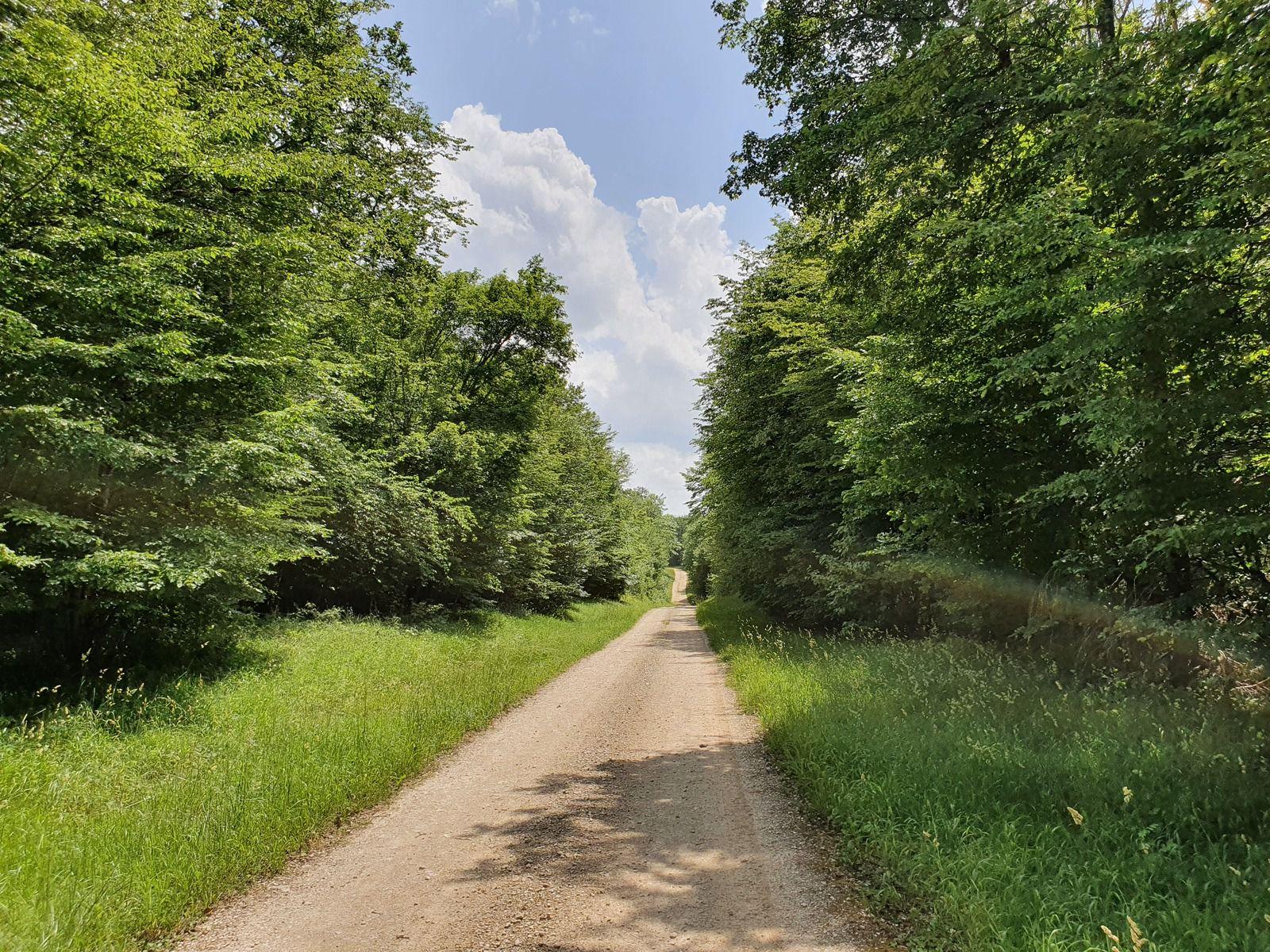 Bois de Maranville