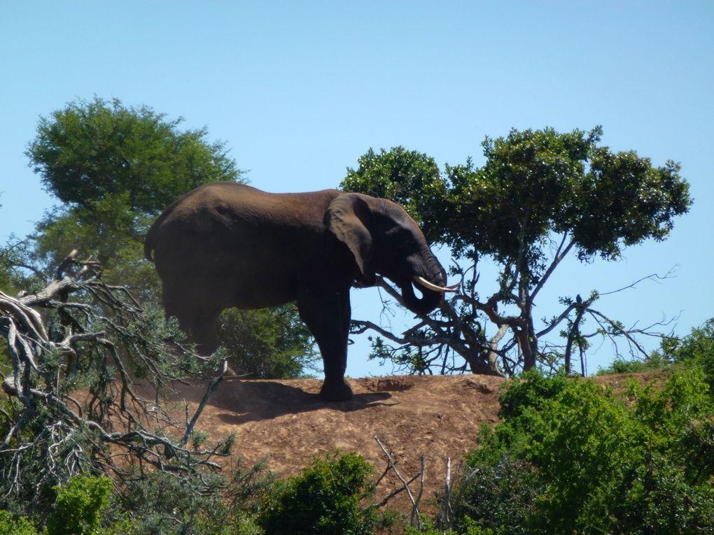 Album - Addo-Elephant-Park