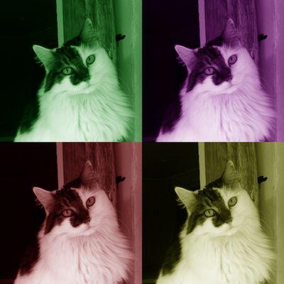 Mon Chat, ce Héros
