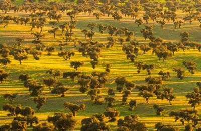 La DEHESA permet de conserver les arbres