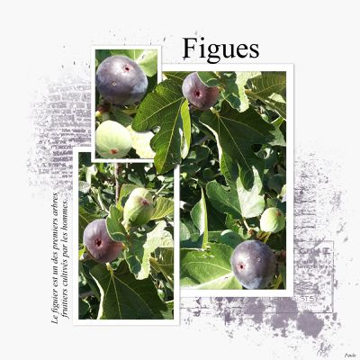 Figues.