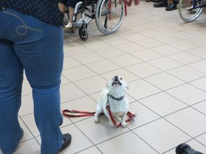 ..avec nos amis les chiens !