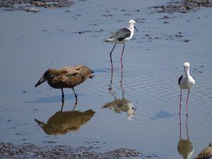 L'Observation des oiseaux est moins spectaculaire mais tout aussi intéressante.